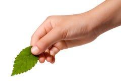 листья удерживания руки Стоковые Изображения RF