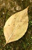 листья уединённые Стоковое Фото
