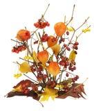 листья умерших ветвей ягод осени Стоковые Фотографии RF