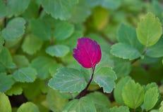листья уникально Стоковое Фото