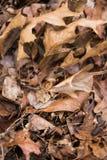 Листья упаденные Брайном на землях парка естественного состояния в зиме стоковое изображение