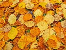 листья упаденные кроватью Стоковое Изображение