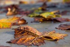 Листья упаденные на тротуар в осени стоковое фото