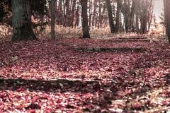 Листья упаденные на шаги разрушенной лестницы парк осени старый Идущ, настроение, концепция ностальгии Стоковое фото RF
