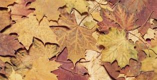Листья упаденные осенью в предпосылке леса сезонной Стоковые Фото