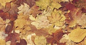 Листья упаденные осенью в предпосылке леса сезонной Стоковые Изображения RF
