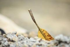 листья упаденных манго стоковые фотографии rf