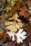 Листья упаденные осенью в воде. Стоковые Фотографии RF