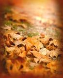 Листья упаденные осенью осветили солнцем после полудня Стоковая Фотография