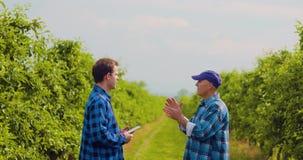 Листья фермера рассматривая пока коллега используя таблетку цифров сток-видео