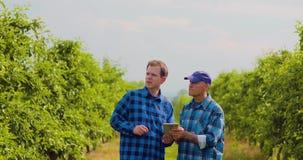 Листья фермера рассматривая пока коллега используя таблетку цифров видеоматериал