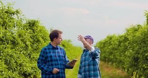 Листья фермера рассматривая пока коллега используя таблетку цифров акции видеоматериалы