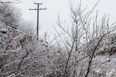 Листья, хворостины и ягоды завода предусматриванные с толстым слоем предпосылки зимы заморозка против предпосылки голубые облака  Стоковые Фото