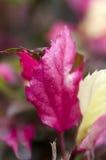 Листья цвета макроса. Стоковые Изображения RF