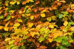листья цвета осени Стоковое Изображение