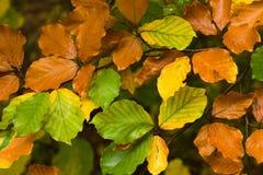 листья цвета осени Стоковая Фотография