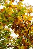листья цвета осени Стоковое Фото