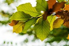 листья цвета осени Стоковые Фото