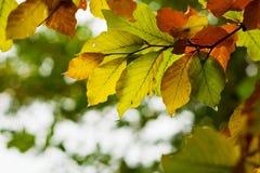 листья цвета осени Стоковая Фотография RF