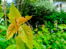 Листья цвета осени Стоковые Изображения RF