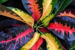 Листья цвета Стоковое Изображение