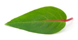листья цветка Стоковое фото RF