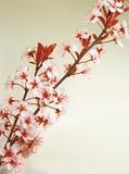 листья цветков новые Стоковое фото RF