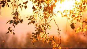 Листья цветня и дерева на заходе солнца сток-видео