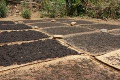Листья чая засыхания стоковое изображение rf