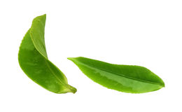 Листья чая Стоковые Изображения