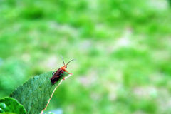 листья черепашки Стоковая Фотография
