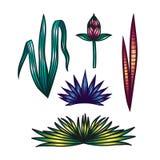 Листья чертежа руки цвета установленные тропические Стоковые Изображения RF