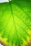 Листья чудо природы, они преобразовывают свет в никакое Стоковые Изображения RF
