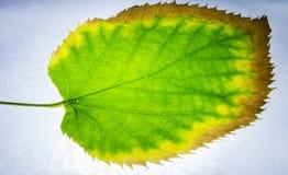 Листья чудо природы, они преобразовывают свет в никакое Стоковое Изображение