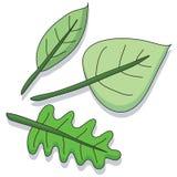 листья шаржа Стоковые Изображения