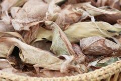 Листья шелковицы Стоковая Фотография