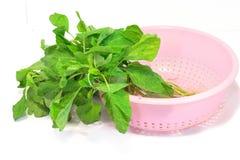 Листья шпината в корзине. Стоковые Изображения RF