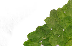 Листья шпината. Стоковое Изображение RF