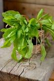 Листья щавеля в корзине стоковые фото