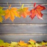 листья экземпляра предпосылки осени над космосом деревянным Стоковые Изображения RF