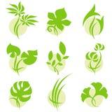 листья элементов конструкции Стоковые Фото