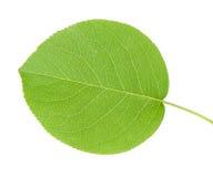 листья яблока Стоковая Фотография RF