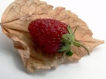 листья ягоды Стоковая Фотография RF