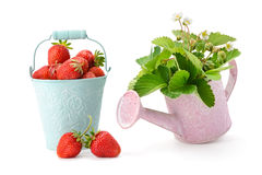 Листья ягоды и клубники Стоковое Фото