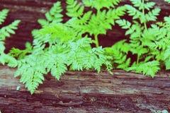 Листья яркого зеленого цвета Стоковые Изображения RF