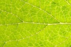 листья 002 деталей Стоковое фото RF