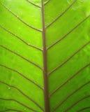 листья 1 предпосылки Стоковые Изображения RF