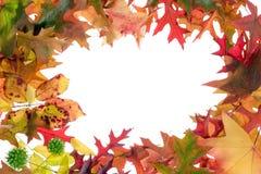 листья 1 рамки падения стоковые изображения rf