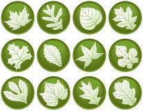 листья 12 кнопок Стоковая Фотография