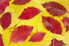 листья 13 предпосылок Стоковые Фото